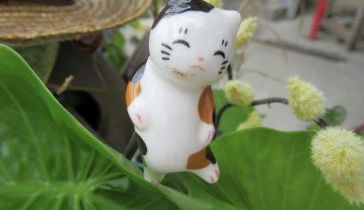 奥武島(おうじま)天ぷら 猫