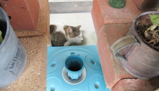 奥武島(おうぶじま)天ぷら 猫